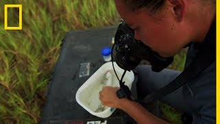 Adjany Costa, halbiológus | National Geographic Explorer