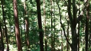 2019/8/14   黒部峡谷鉄道   黒薙~鐘釣⑤