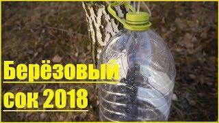 Берёзовый сок - самое время, метод сбора (неформатное видео)...