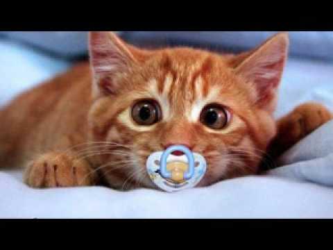 Cat Video Hey Meow