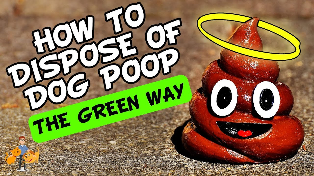 The 7 Options for How to Dispose of Dog Poop (the green way
