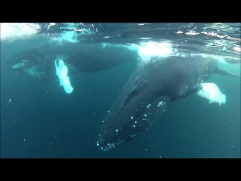 Whalesafari in northern Norway January 2013