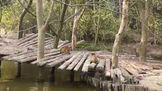 Зоопарк во Франции (Лилль)(, 2013-05-20T17:21:17.000Z)