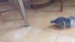 Котята 1 месяц в дар