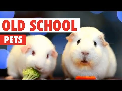 Old School Pets | Funny Pet Video Compilation 2017
