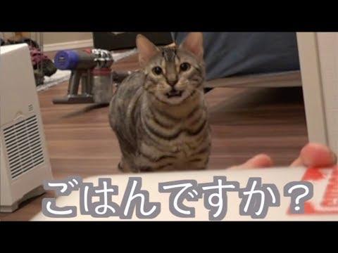 猫たちにとってのご飯の合図