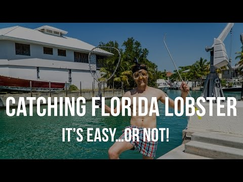 Catching Florida Lobster is Easy...or NOT!