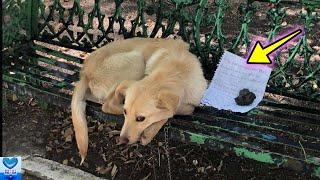 ベンチにつながれていた子犬。そばに置かれた手紙の内容に涙が溢れる【感動】 優しさや思いやりというのは とても暖かいものです。 誰に助けを求めるわけでもなく 孤独に ...