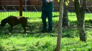 видео ветеринарная клиника юзао