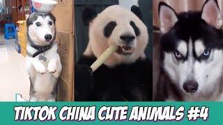 TikTok | China Cute Animals Compilation 2019 #4