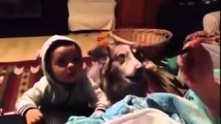 Пес сказал то,что не смог малыш