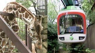 キリンやカバも登場!上野動物園モノレール Part2【レイルリポート #06】Giraffe and Hippopotamus appear! Ueno Zoo Monorail thumbnail