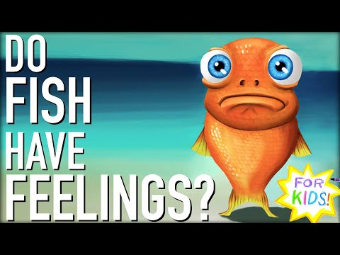 Do Fish Have FEELINGS?