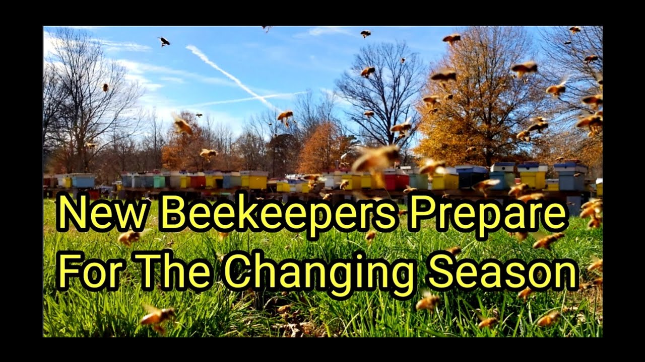 New beekeepers prepare for the changing season