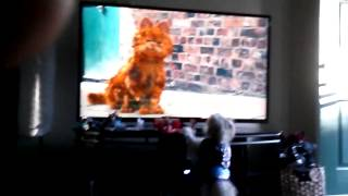 Puppy loves Garfield