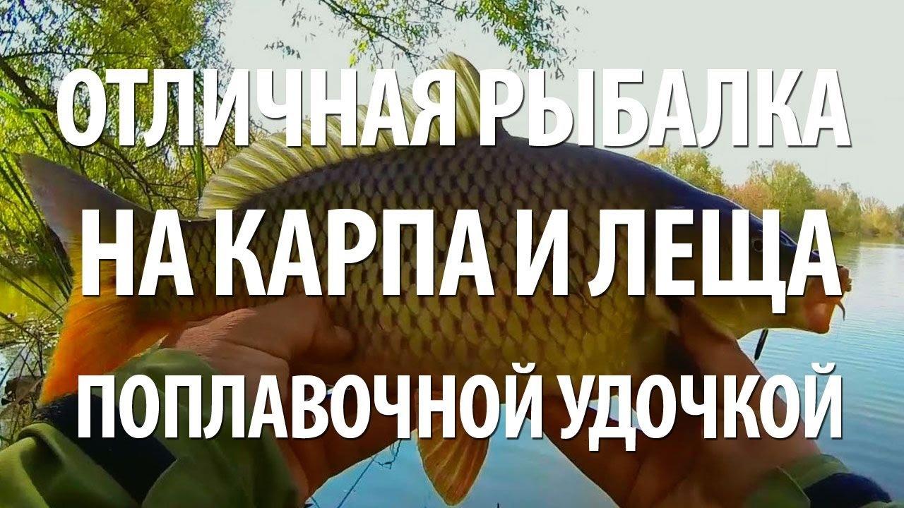 рыбинское водохранилище толстолобик