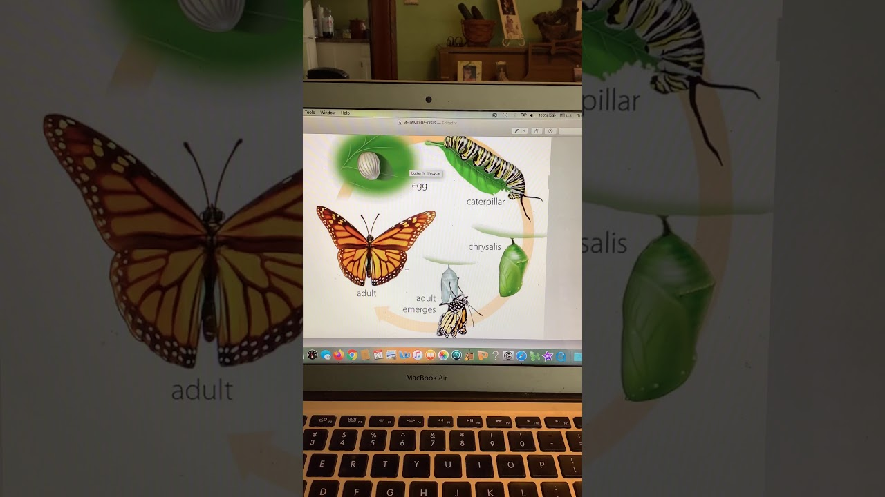 Science 4 23 Entomology Erfly Life