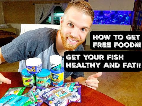 FISH FOOD: What And How To Feed Your Saltwater Fish (AND MAKE THEM FAT!)