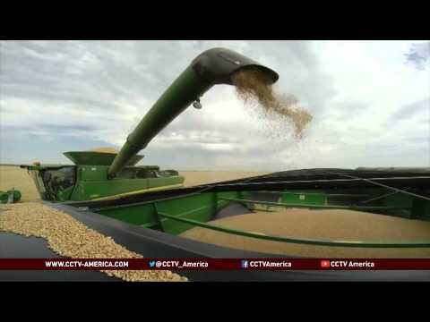 US wheat farmers may benefit from Russia sanctions