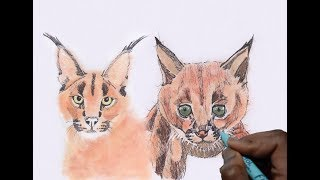 HOW TO DRAW CARACALS BY SCRIBBLING ! (CARACAL GHOST)