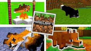 5 COISAS QUE VOCÊ NÃO SABIA SOBRE AS RAPOSAS DO MINECRAFT PE!! (Minecraft Pocket Edition)