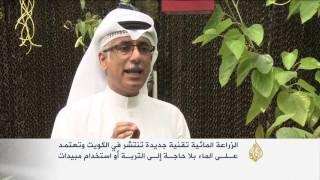 الزراعة المائية.. تقنية جديدة في الكويت
