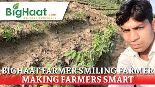 High Yield & New Tomato Seeds from US Agriseeds | U.P. Farmer's BigHaat Experience
