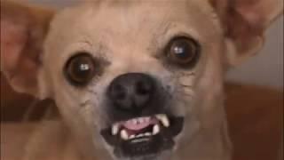 Самые популярные клички для маленьких собак  The most popular nicknames for small dogs