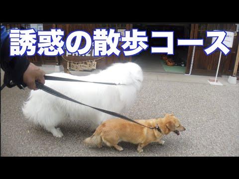 ぎふ里山公園散歩 第二弾