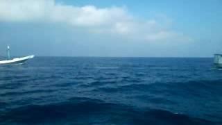 Kapal pinisi Surya perdana vs rahmat setia vs berkat rahmat usaha bagian 2