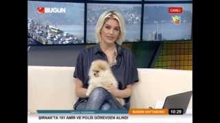 Pomeranian Boo ırkını Can Paksoy Bugün Tv'de Anlattı