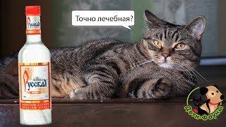 Стоит ли лечить собак и кошек водкой?