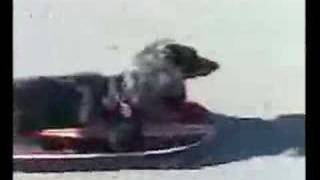 Wiener Dog Riding Skateboard