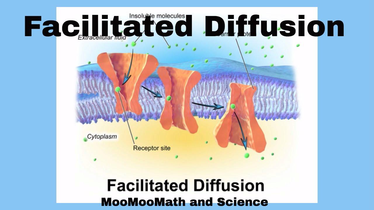 Facilitated Diffusion - YouTube