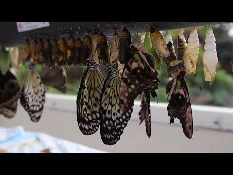 Butterflies Are Blooming: The Journey at Meijer Gardens