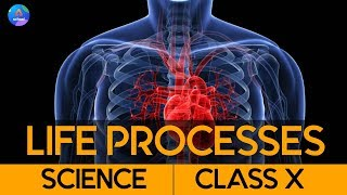 Class 10th | Science | Chapter 6- Life Processes | Day 1.4
