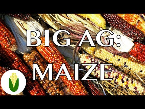 GMO Corn | Big Ag Episode 1