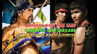 Authentic Muay Thai Training Camp in Thailand: Sitjaopho Gym   The Beautiful Mind of a Champion