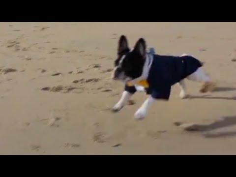 Dog Brings Rings to Wedding