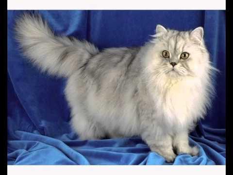 Корм для кошек чойс отзывы