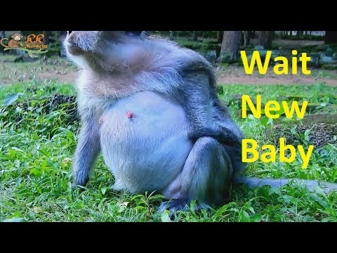 Old female mother nearly give birth difficult movement| Tima! We wait welcome new baby.