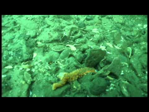 Video Of Sea Star Wasting Syndrome In Yaquina Bay, Oregon
