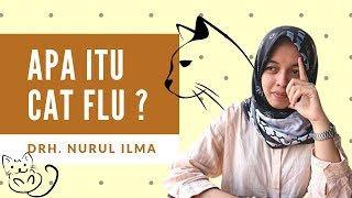Apa itu Cat Flu atau Flu Kucing ?