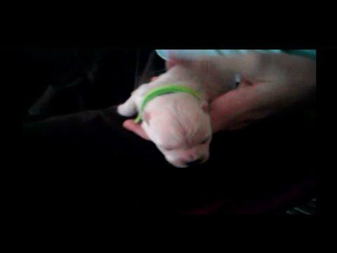 Puppy Update: Bottle Feeding
