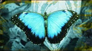 Ascension News: The Year of the Butterfly 2018