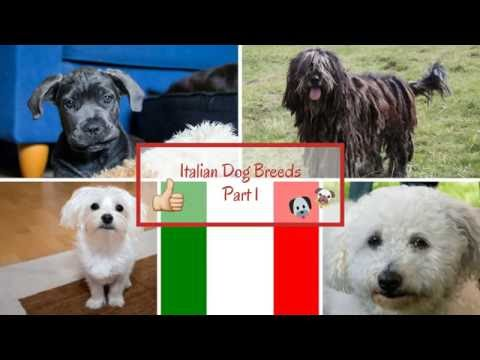 Italian Dog Breeds Part 1