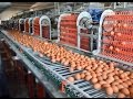 Maya Kafes yumurta toplama otomatik yemleme kafes sistemleri