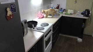 Что делает кошка когда хозяев нет дома
