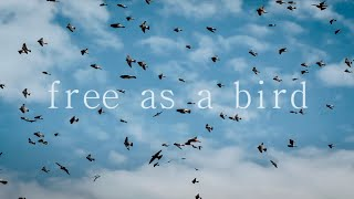 Free As A Bird (John Lennon) By Lindsay & Isaac