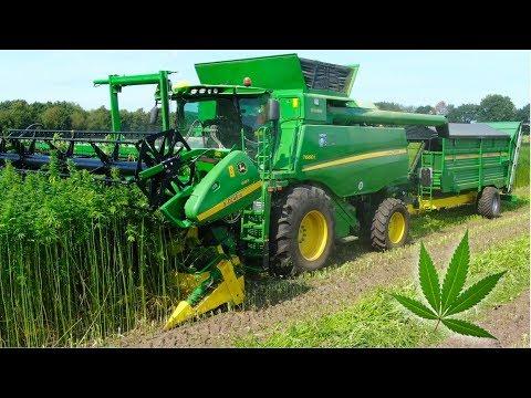 Hemp Harvest | HempFlax | John Deere T660i Double Cut Combine | For CBD oil